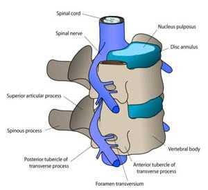 anterior cervical corpectomy spine surgery