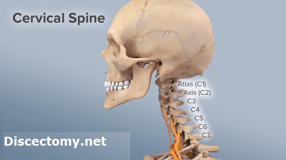 Cervical_Spine_anatomy