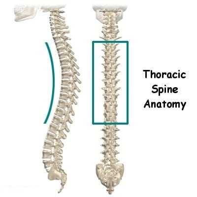 thoracic spine