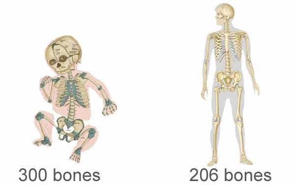 baby 300 bones