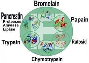 enzymes systemic