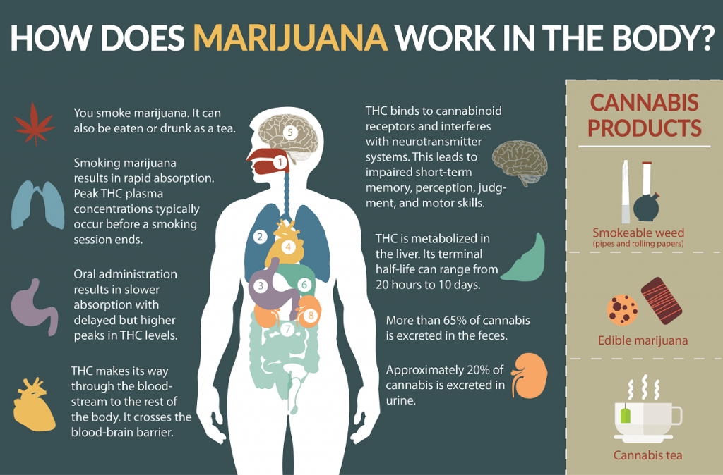How Does Marijuana Work ?