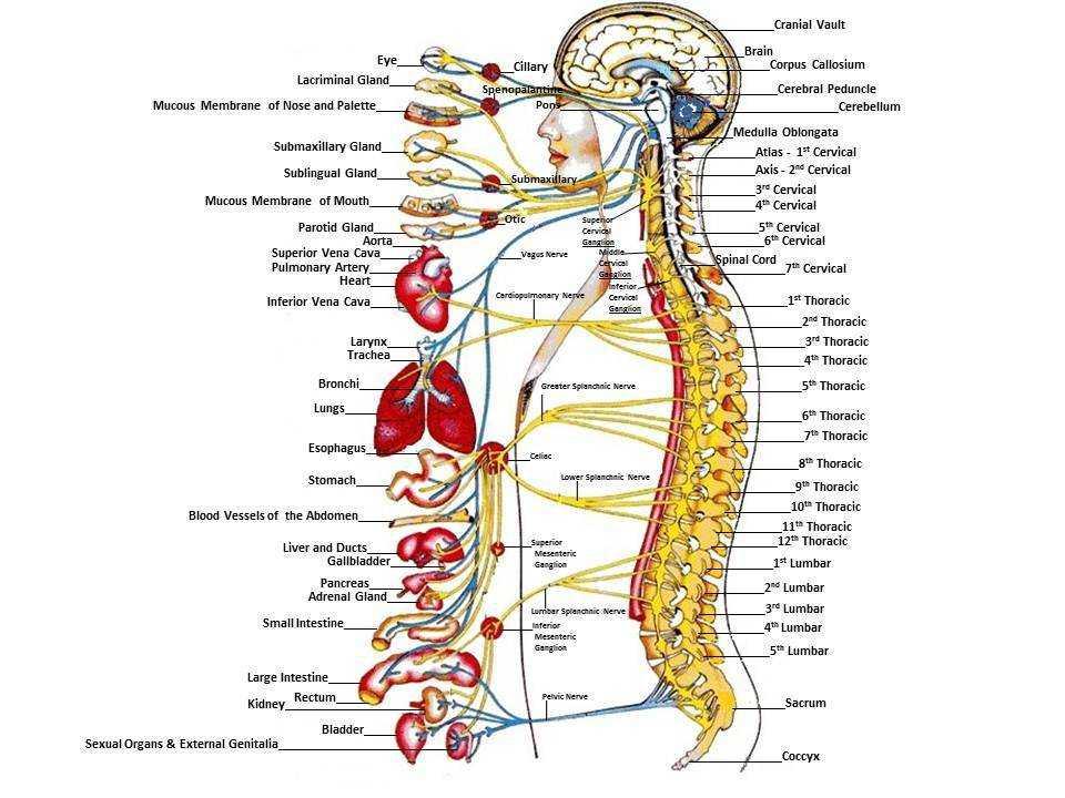 Physiology Of Biofeedback