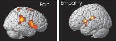 pain empathy