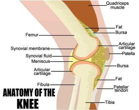 Photo of Chronic Knee Pain Causes