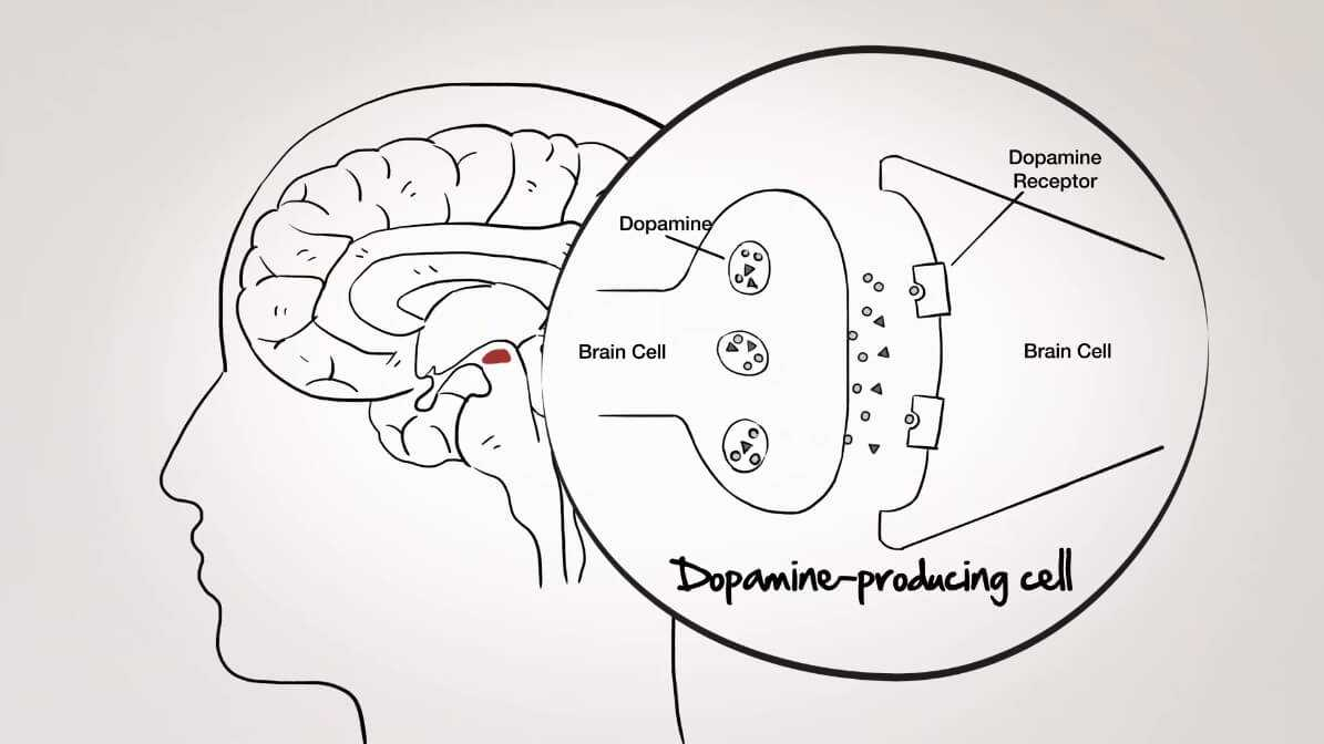 dopamine receptor