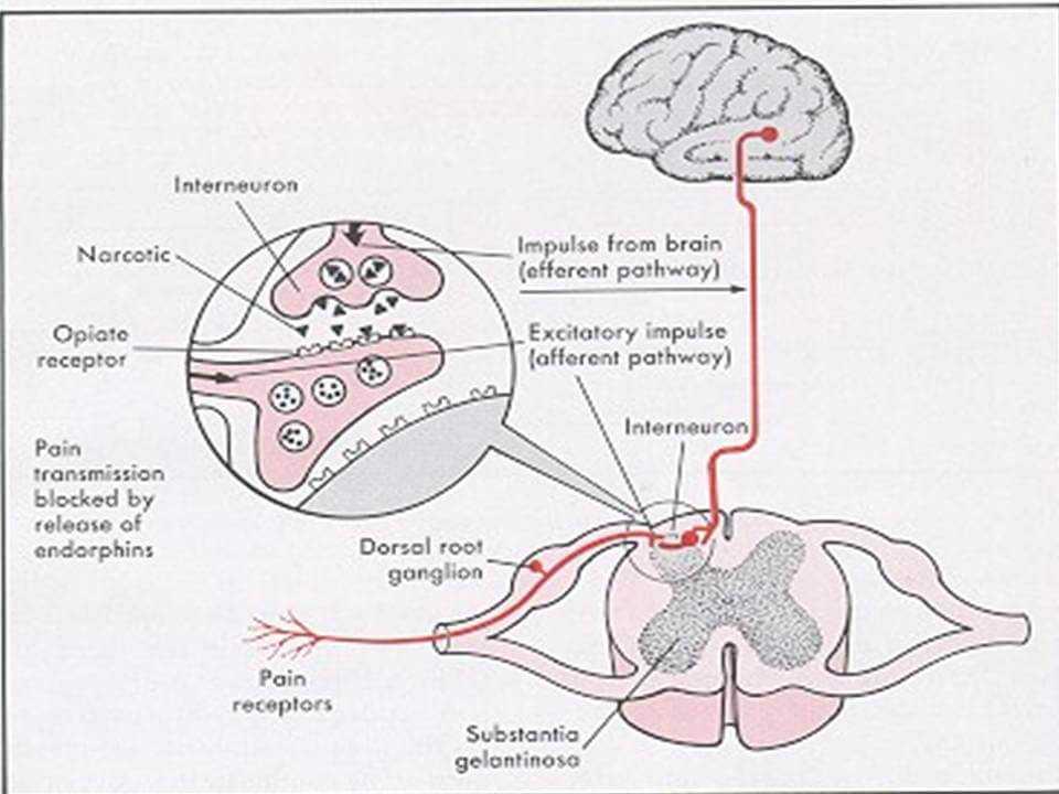 opiates neurochemical changes