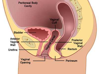 vaginal pain anatomy