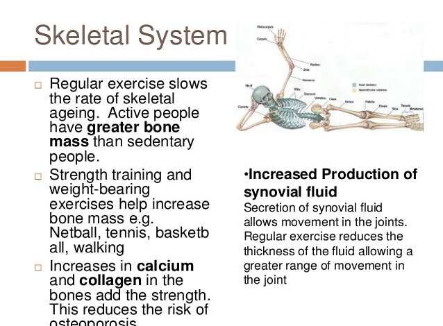 Musculoskeletal System exercise