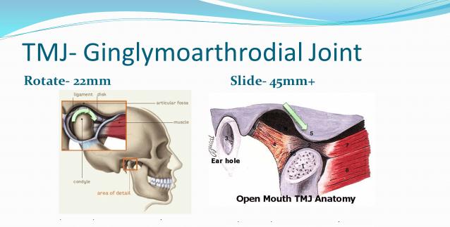ginglymoarthrodial joint