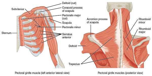trauma or tissue