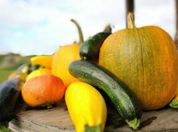 Cooked vegetables like Zucchini, pumpkin and squash