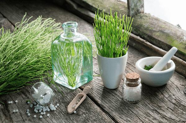 Horsetail healing herbs for osteoarthritis
