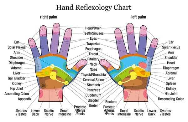 Hand reflexology chart with accurate description of the corresponding internal organs and body parts