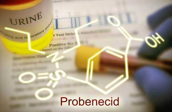 Probenecid is able to inhibit completely the renal excretion of certain drugs dope