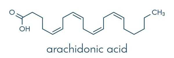 arachidonic acid