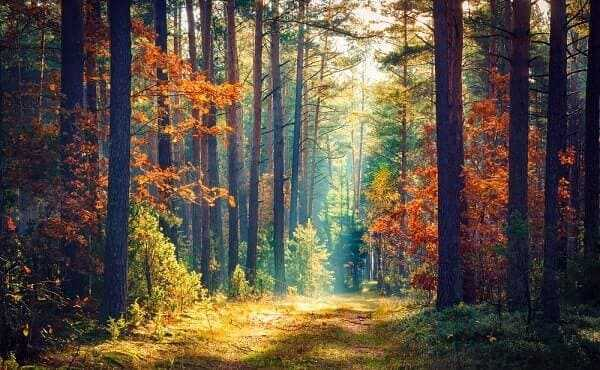Vivid morning in colorful forest with sun rays through branches of trees