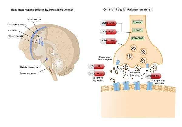 levodopa for parkinsons disease