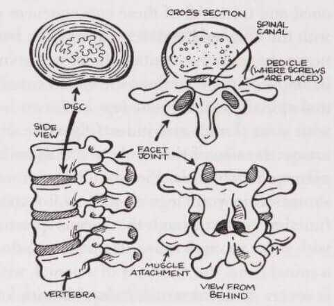 spinal stenosis anatomy
