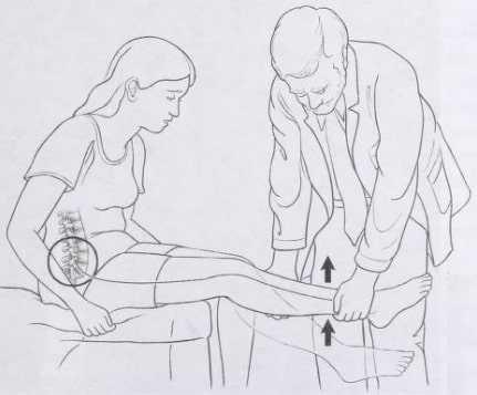 Demonstration of straight leg raising maneuver
