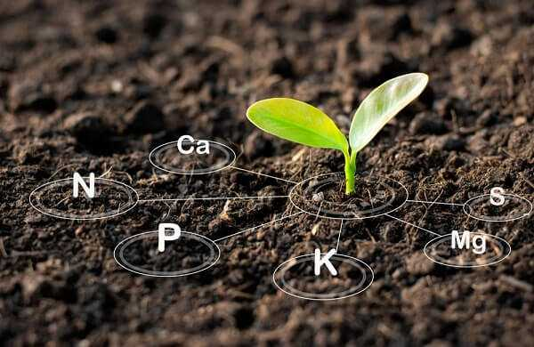 The seedlings are growing from the rich soil