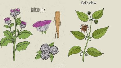 Burdock Root and Cats Claw