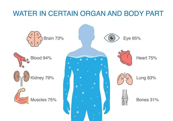 Water in certain organ and body part of human