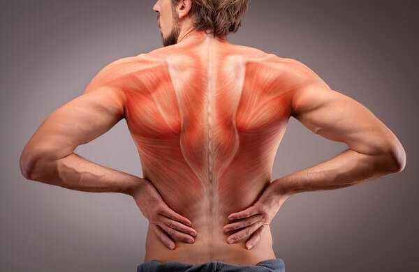 back view athlete man torso muscle